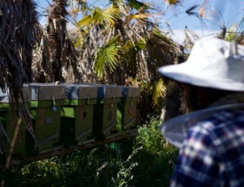 The beehive …Our precious treasure!